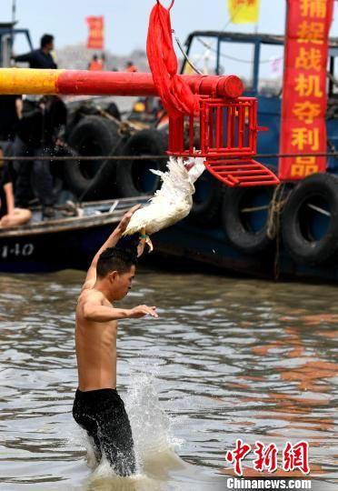 海上抓鸭。 王东明 摄