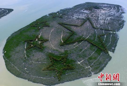 红树林长出五角星图案。 王东明 摄