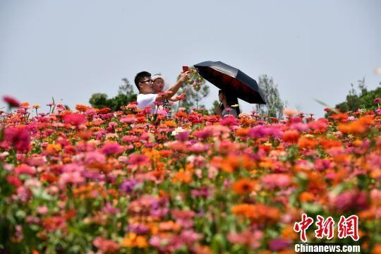一家三口在花海公园游玩。 王东明 摄