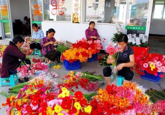 村民将准备上市的鲜切花进行包装。