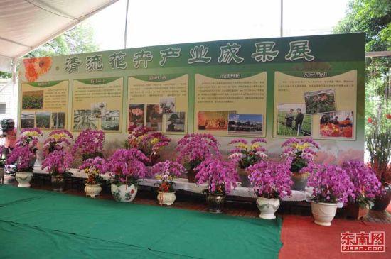 清流鲜切花参加福建省花卉展。