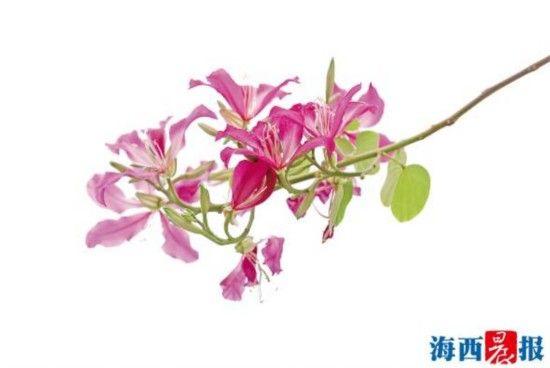 鲜艳的花儿惹人爱。