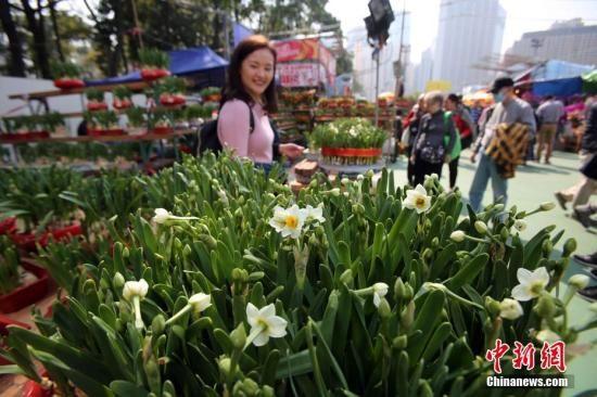 资料图:春节临近,香港花市热闹迎客。中新社记者 洪少葵 摄