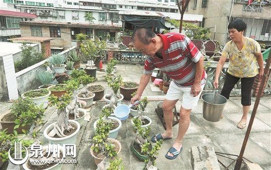 一对老夫妻在自家阳台种下数十盆盆栽