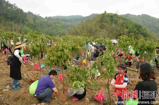 350组家庭共同植树造林,播种1200余棵樱花树苗