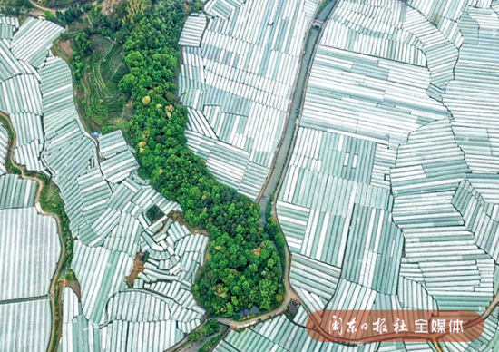 图为松罗尤沃村现代农业葡萄园。