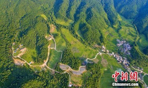 永平镇箩斗坑森林人家。 赖太禄 供图