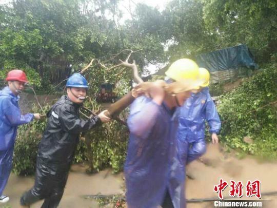 霞浦县长春镇多处树木倒地,当地政府迅速组织力量清障。 霞浦宣传部 摄