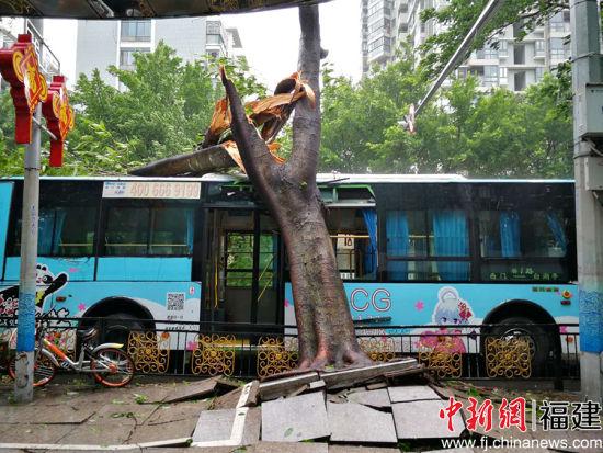 11日上午,澳门威尼斯人网站西门公交车站,一辆1路公交车被刮断的大树压到(图片由热心市民朱先生提供)