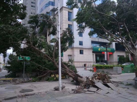 澳门真人博彩娱乐官网市古田路,一棵树被吹得连根拔起(网友@野仙拍摄)