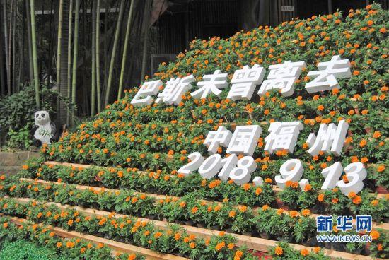 """9月13日是大熊猫""""巴斯""""去世一周年的日子,来自各地的""""巴斯""""迷齐聚福州大梦山,再次回顾""""巴斯""""传奇的一生。新华网 刘丰 摄"""