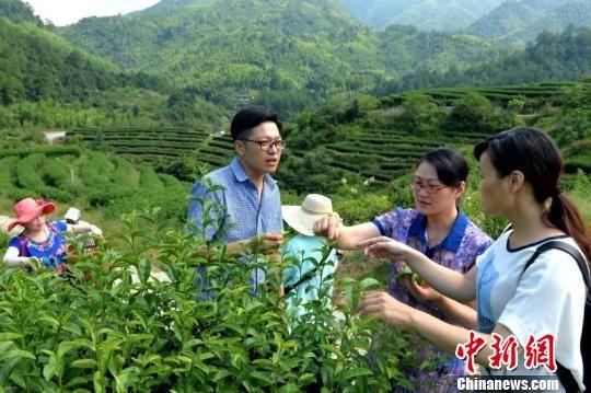长汀台商创业产业基地里,泳绿茶厂成为经济增长新亮点。 邱冰花 摄