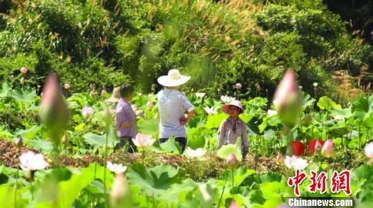 脱贫致富项目成为长汀农民增收新途径。 朱芳彬 摄