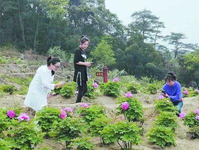 吴洋村列入新农村建设示范点,荒地也栽上了艳丽的牡丹。