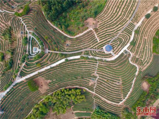 近年来,大田县立足当地高山生态资源和茶产业发展优势,加快特色品牌建设、加快茶旅融合发展、加快全产业链升级,促进茶业提质增效、茶农持续增收。 福建日报记者 游庆辉 摄
