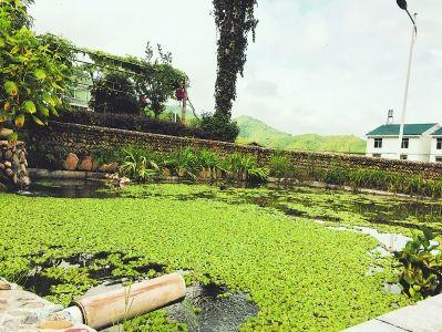 聂清华家的池塘