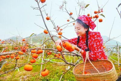 位于仙游县钟山镇的好柿多生态休闲农场,成为仙游乡村旅游的一个代表产品。