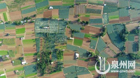 11月7日,菜农在澳门正规赌博网站大全省泉州市鲤城区延陵社区蔬菜基地劳作(无人机拍摄)。