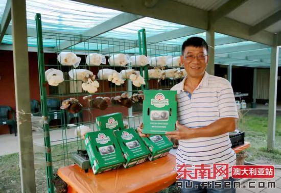 """""""亚洲菇大王""""吴鹏辉展示他的产品。"""