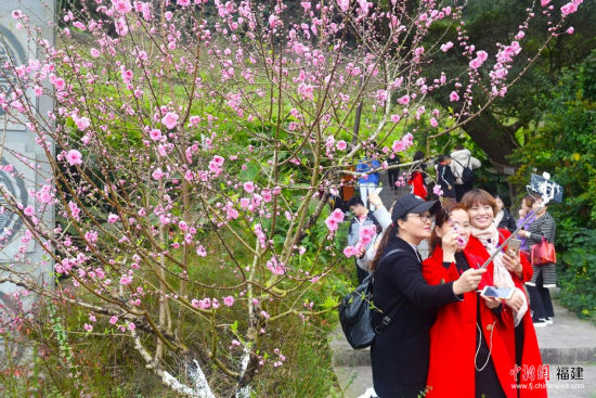 缤纷美丽的桃花朵朵盛开,女游客在桃花前自拍留念。