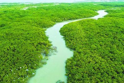 龙海红树林自然保护区