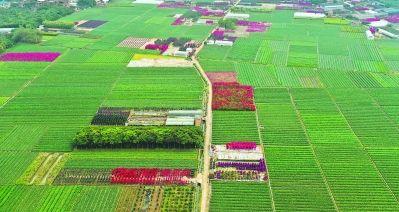 漳州水仙花海公园