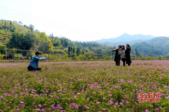 游客在花丛中拍照 吴有森 摄
