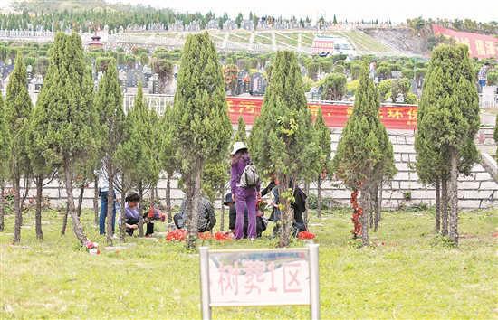 越来越多的市民选择绿色殡葬 (林劲峰 摄)