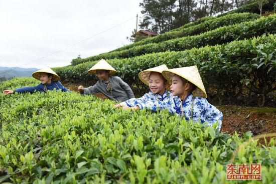 孩童在桃溪体验采茶。福建日报通讯员 罗晓军摄