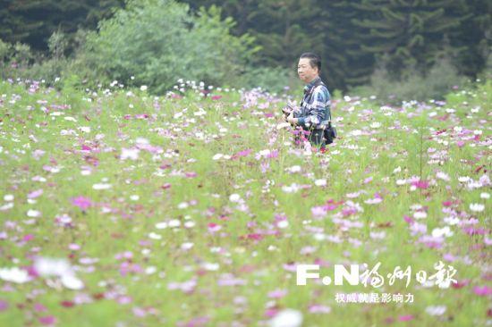 市民入园欣赏波斯菊。