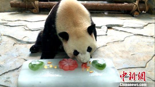 大熊猫 供图