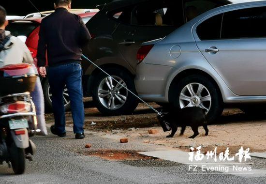 """福州收容200多条流浪犬 整治""""犬患""""将常态化长效化"""