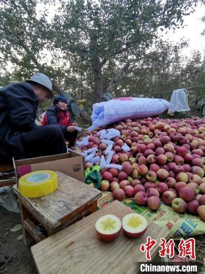厦门农行携手厦门中达电商,推出爱心苹果线上消费扶贫模式,帮助临夏州永靖县果农解决苹果销路问题。供图