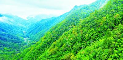 福建:奋进新时代 逐绿新征程