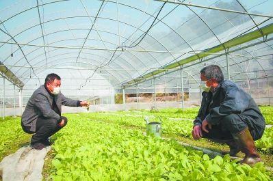 近日,在将乐县高唐镇邓坊村的一个育苗大棚里,技术员朱隆祥(左)在指导烟农如何进行施肥、浇水、移栽等工作。记者 游庆辉 通讯员 沙观球 摄