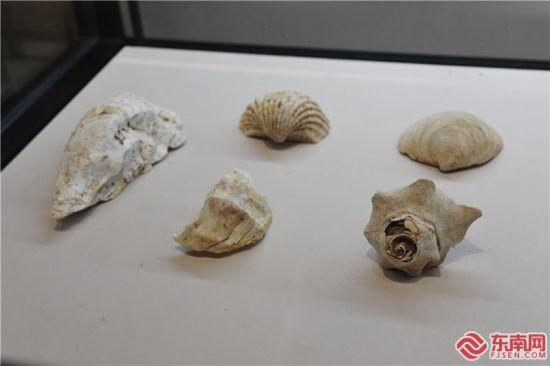 壳丘头遗址群 向海迁徙的第一块踏板