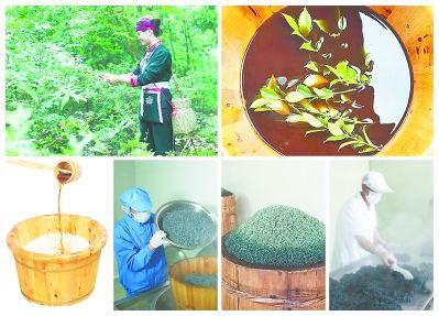 畲族乌饭制作流程 (本栏图片由受访者提供)