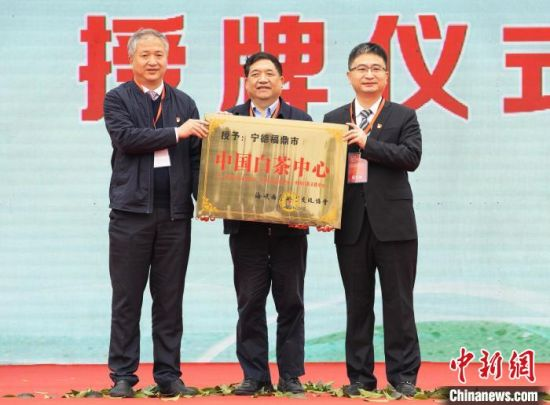 """图为海峡两岸茶业交流协会授予福鼎市""""中国白茶中心""""称号。 刘超超 摄"""