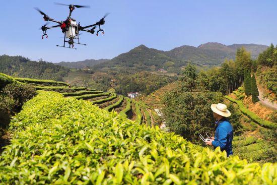 近日,周宁县玛坑乡智慧茶园里,茶农运用无人机进行统防统治。黄起青 摄