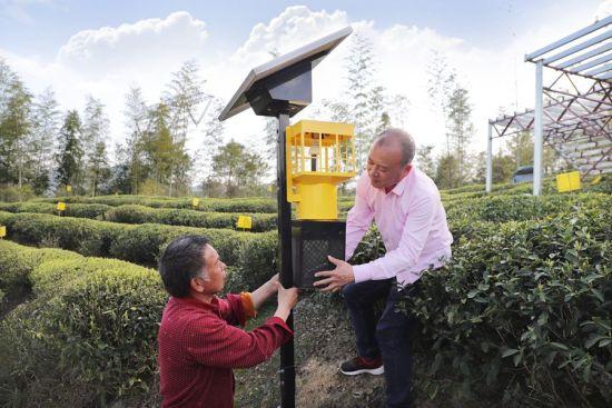 近日,周宁县玛坑乡智慧茶园里,茶农在安装温度监测设备。黄起青 摄
