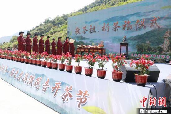 """4月28日,名茶""""铁观音""""发源地福建省安溪县举办开茶节。图为敬茶祖、祈茶福仪式。 林楷煜 摄"""