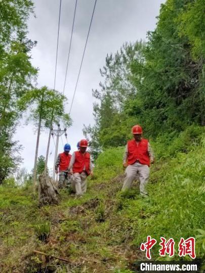 6月8日上午,将乐县供电公司万全供电所员工冒雨在10千伏竹舟线进行特巡。 郑承光 摄