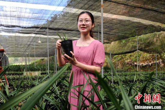 图为日前张燕珠推介该村兰花。 中新社记者 张金川 摄