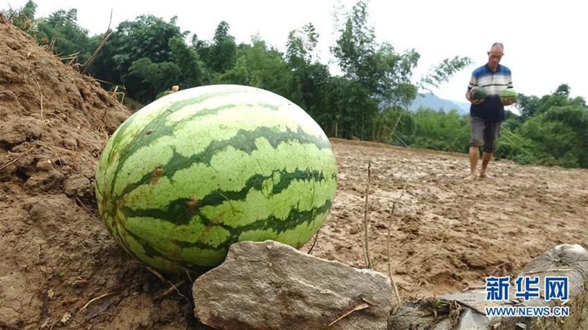 福建顺昌:洪水过后救灾忙