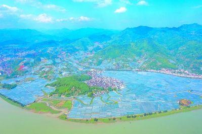 福建福安:万亩葡萄避雨栽培