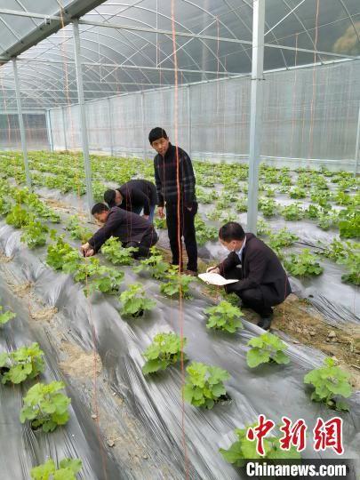 科技特派员到大棚指导农民种植农作物。 魏兴谷 摄