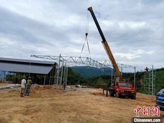 正在建设中的槐南镇养牛基地。 魏兴谷 摄