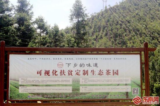 """下党乡开创了全国第一个扶贫""""定制茶园""""。东南网记者 林先昌 摄"""