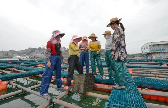 肖贤梅(左二)与姐妹们在海上养殖平台。