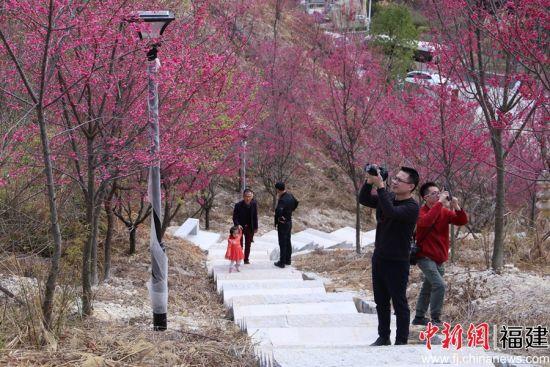 洪四村的樱花园成为村民和游客休闲散心的好去处。
